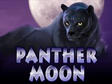 Платный автомат Panther Moon